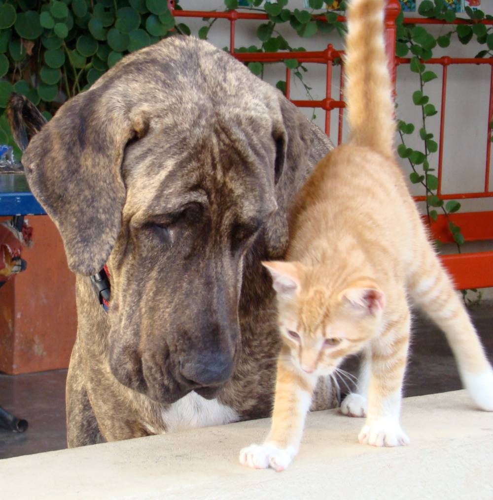 Bringing Cats and Dogs to Los Cabos